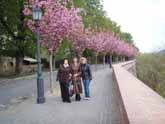 Будапешт. Сакура цветет