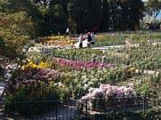 Бал хризантем 2011